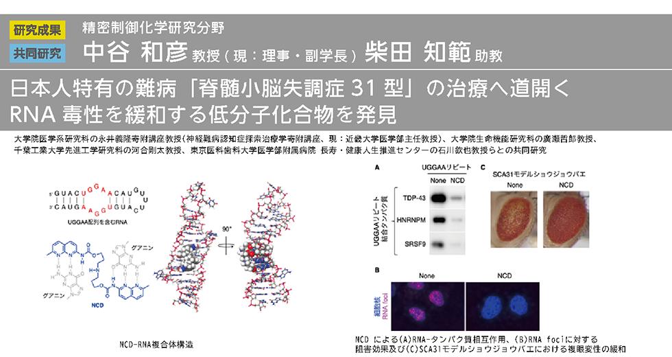 日本人特有の難病「脊髄小脳失調症31型」の治療へ道開く RNA毒性を緩和する低分子化合物を発見