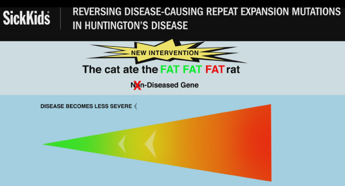 Huntington's disease-causing DNA repeat mutations reversed in the lab