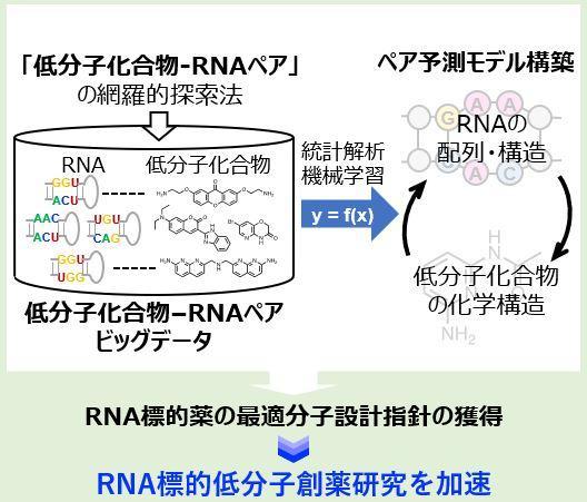創発的研究支援事業:RNA標的のケモインフォマティクス(村田 亜沙子 准教授)
