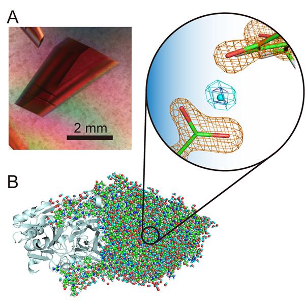 宙に浮く水素イオン?! ―大型タンパク質の中性子結晶構造解析で見えた特異な世界―