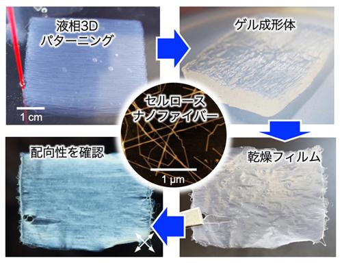 ナノセルロースを自在に配列集積する液相3Dパターニング技術を開発 〜多軸配向による紙・フィルムの高性能化に貢献〜