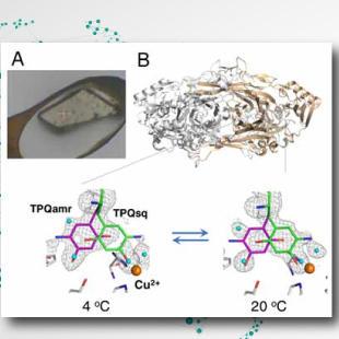 結晶の中でタンパク質の