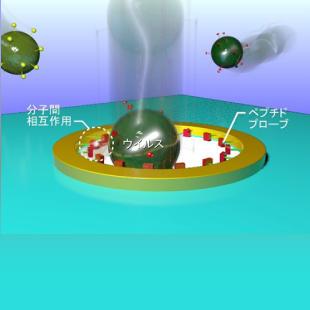 ナノポアセンサ×ペプチド工学でインフルエンザウイルスを1個レベルで認識する新規ナノバイオデバイスの開発に成功!
