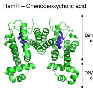 腸内細菌による胆汁酸認識の分子機構を解明!
