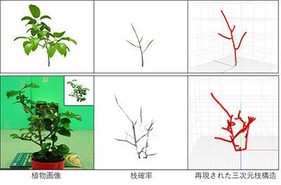 植物の画像から、葉に隠れた見えない構造を再現 画像解析と人工知能でつくる未来の栽培技術