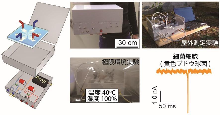 持ち運び可能な微生物センサーを開発