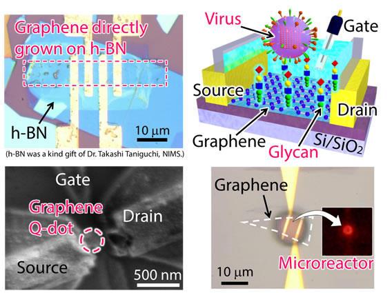 ナノカーボンを用いた量子デバイスやバイオデバイスの開発
