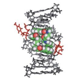 CAGリピートと低分子リガンド複合体のNMR構造