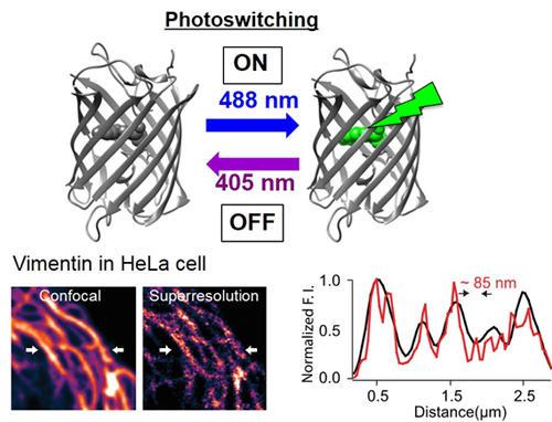 図1. 光スイッチング蛍光タンパク質Kohinoorを用いた超解像イメージング